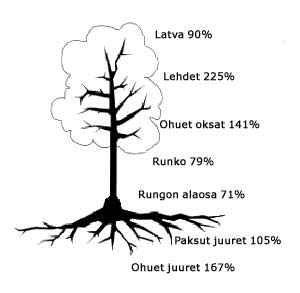 Tammen juuret