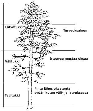 Yksittäisen Puun Tilavuus Taulukko